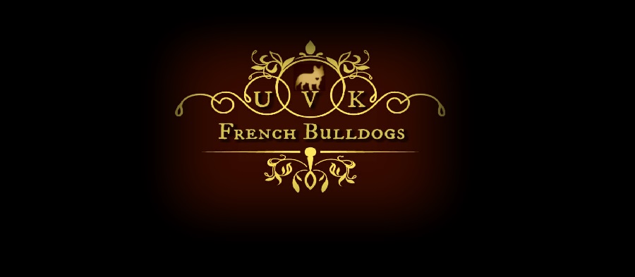 AKC French Bulldogs