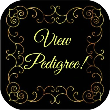 View Pedigree